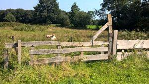 Houten Hekwerk Tuin : Een houten hekwerk voegt wat toe aan je tuin koopjesvinder